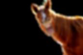 AdobeStock_72564896_edited.png