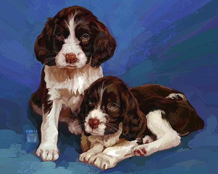 TVW Puppies
