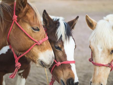 L'empathie chez le cheval