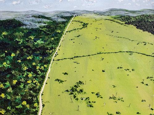 The Bigger Picture: Deforestation