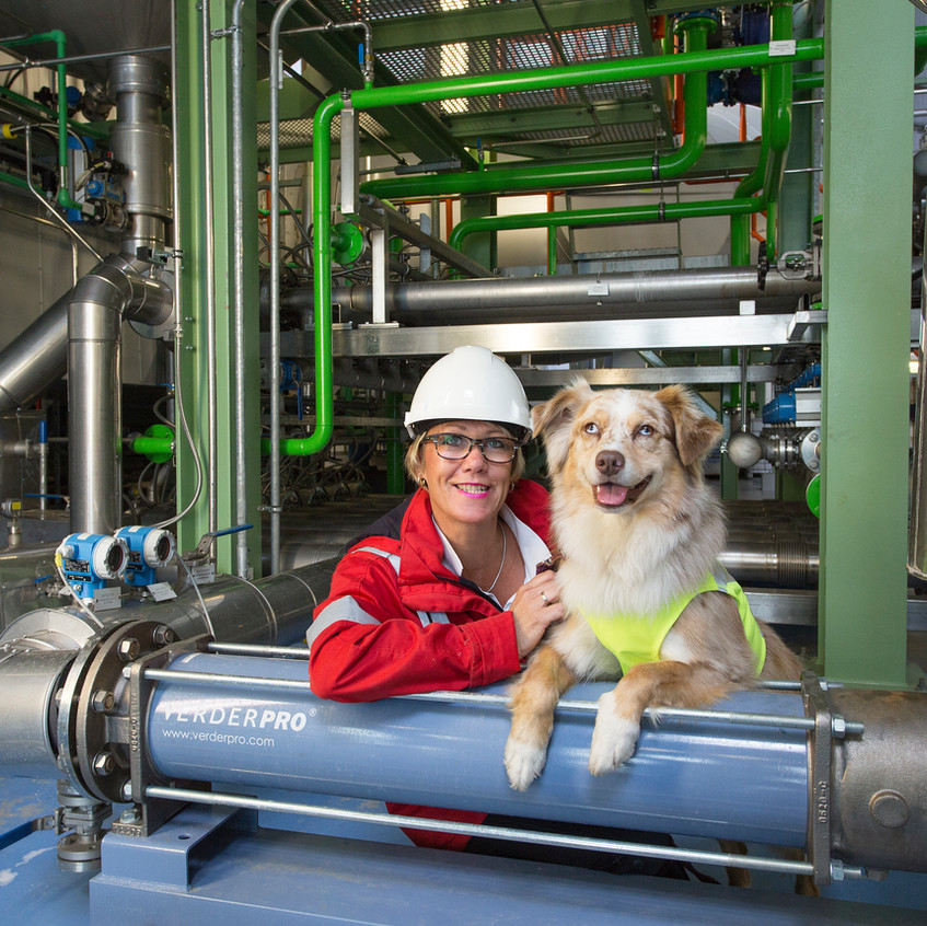 Gedragstherapie voor honden in Twente