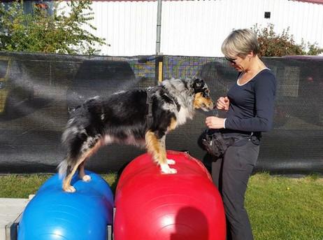 Balans en Coördinatie, een geworteld begrip in hondenland momenteel.