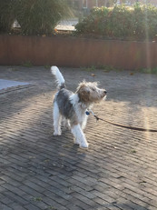 Gehoorzaamheids training hond