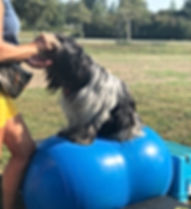 Balanced dog