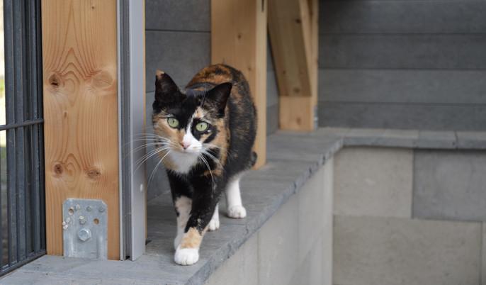 Katze in Katzenhaus