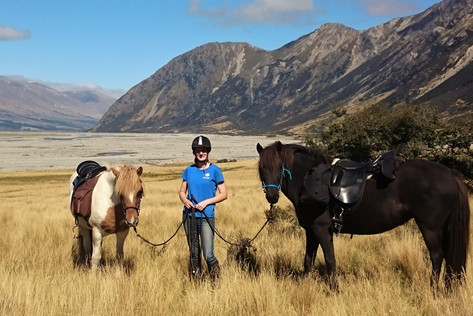 Icelandic horses in the high country of New Zealand's South Island