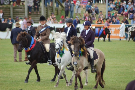 Presenting the breed in the Grand Parade at the Canterbury A& P Show