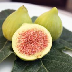 figs-532742