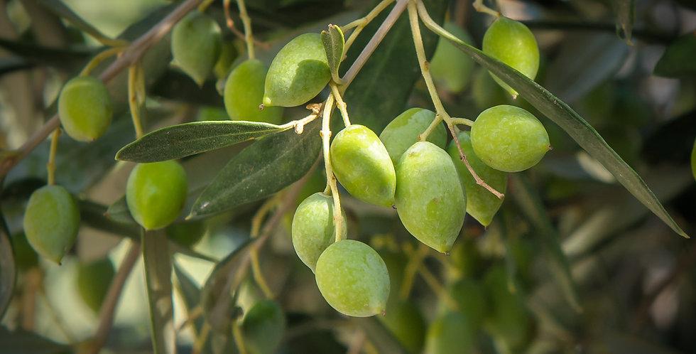 "Olive ""Chalkidiki"" (Large)"