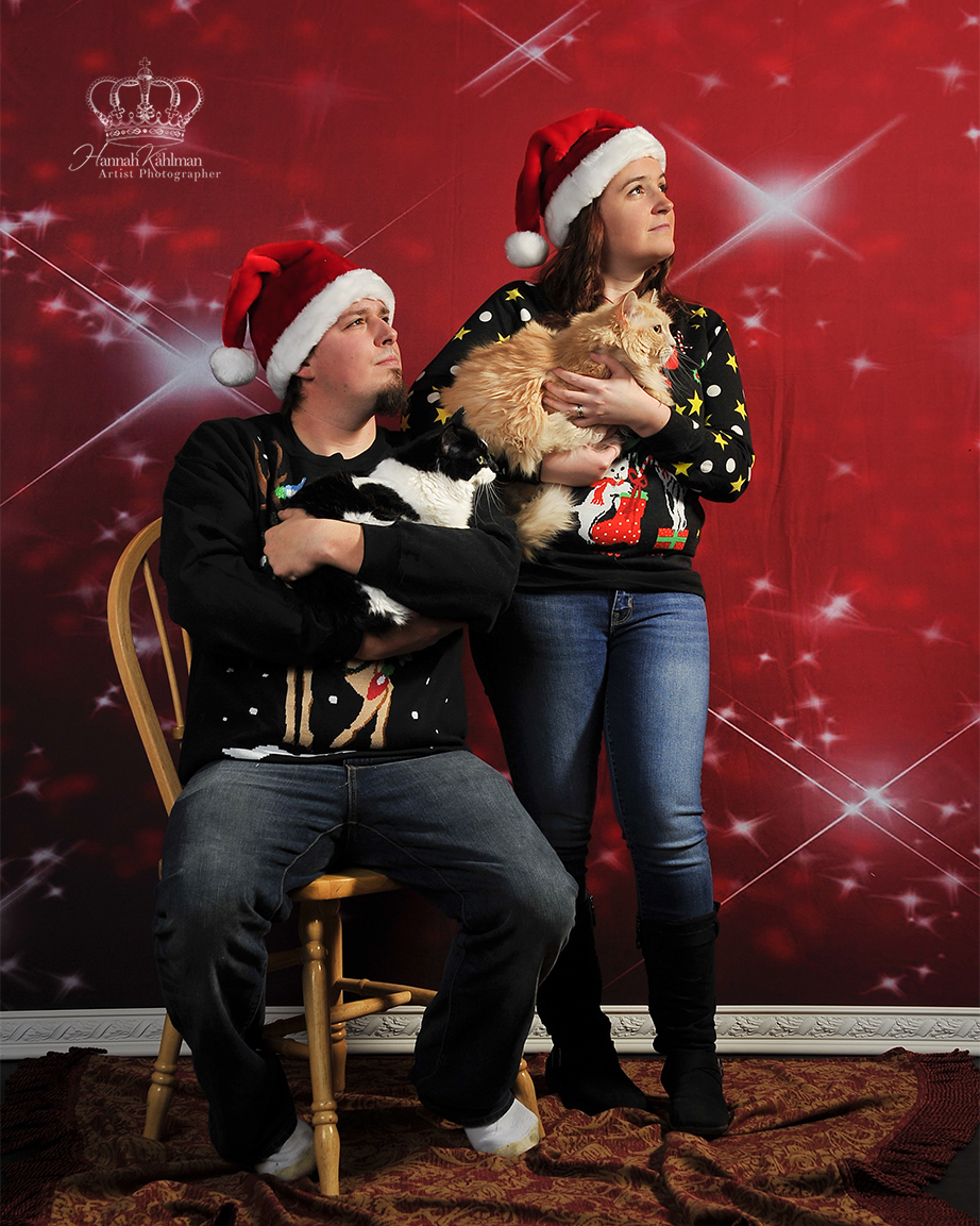 Fun_creative_Christmas_photos_with_cats_