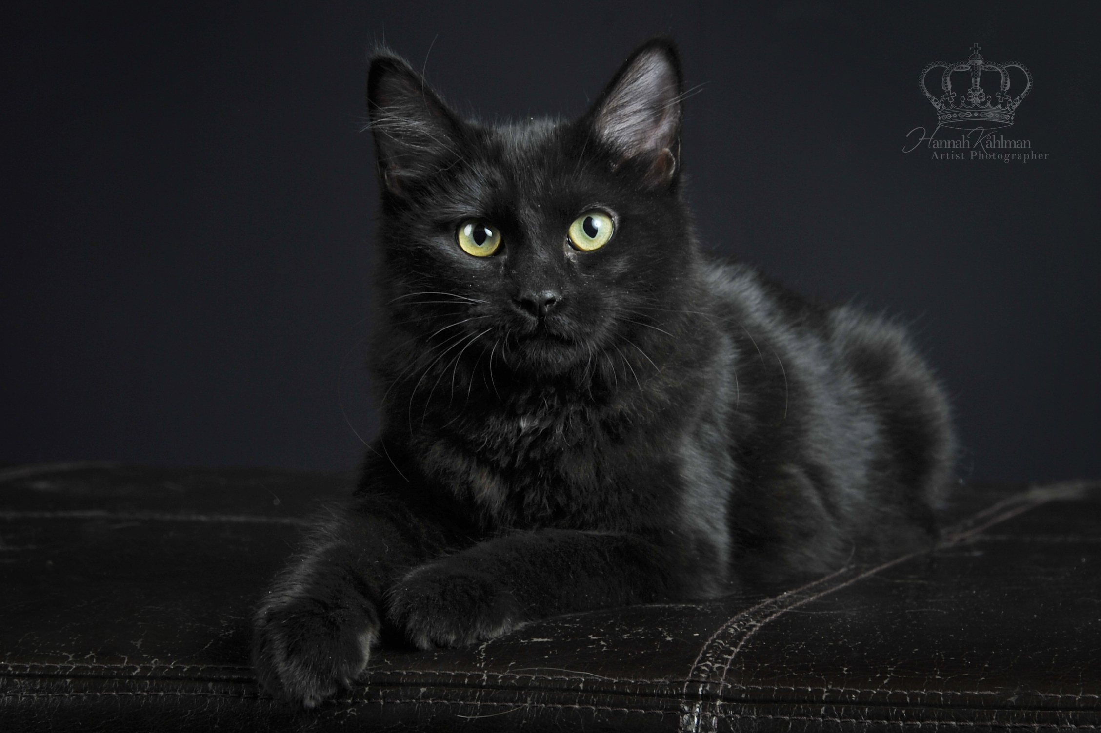 Kitten_cat_on_black_studio_background_fi