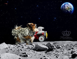 Creative fantasy photo of dog in space o