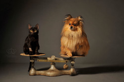 Photo_of_Cat_and_dog_on_scale_Fine_art_p