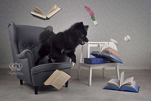 Fun_composite_photo_of_dog_jumping_for_p