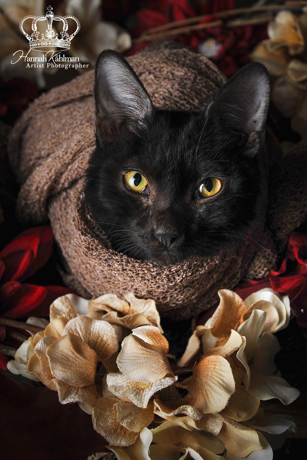 Kitten_dressed_in_flowers_like_newborn_Anchorage_Alaska_pet_photographer_Hannah_Kåhlman_Artist_Photo