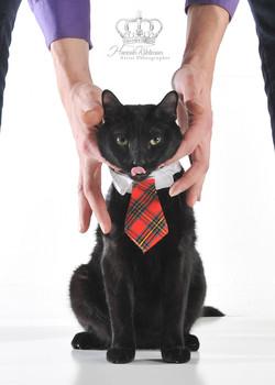 Black_kitten_portrait_Anchorage_Alaska_Eagle_River_pet_photographer_Hannah_Kåhlman_Artist_Photograph
