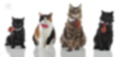 Cat_photo_four_cats_portrait_christmas_p
