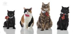 Cat_photo_four_cats_portrait_christmas_p
