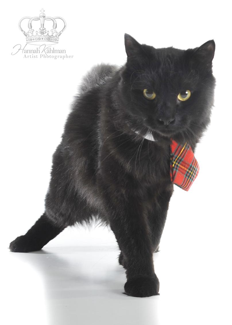 Kitten_black_Anchorage_Alaska_Eagle_River_pet_photographer_Hannah_Kåhlman_Artist_Photographer_Univer
