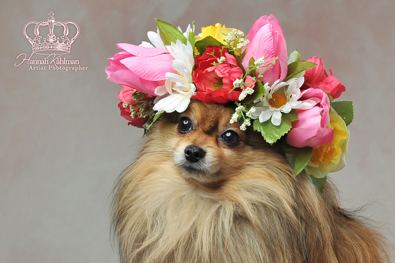 Cute_dog_photo_flower_crown_on_head_dog_portrait_pet_photorapher_Anchorage_Alaska_Hannah_Kåhlman_Art