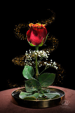 red_rose_Beauty_and_the_beast_for_commer