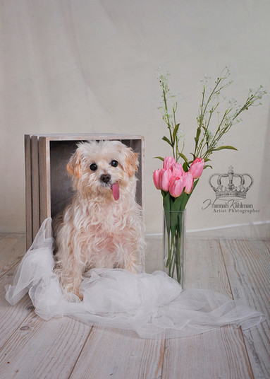 Cute_dog_portrait__Anchorage_Alaska_pet_