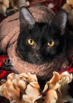Fine_art_oil_painting_portrait_cat_kitten_by_Anchorage__Alaska_Pet_Photographer_Hannah_Kåhlman_Artis