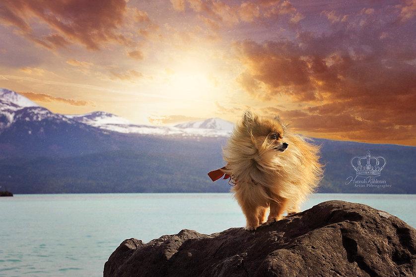 Fine_Art_dog_portrait_outside_by_Alaska_