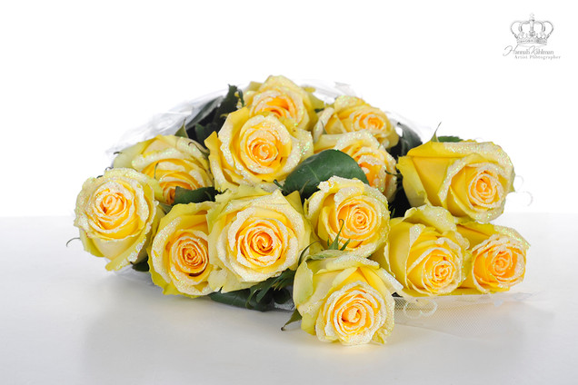 Yellow_roses_for_commercial_photography_