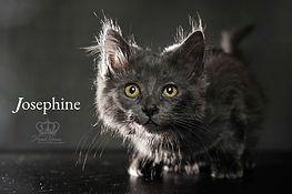 Josephine kitten Feral Cat Lady Anchorag