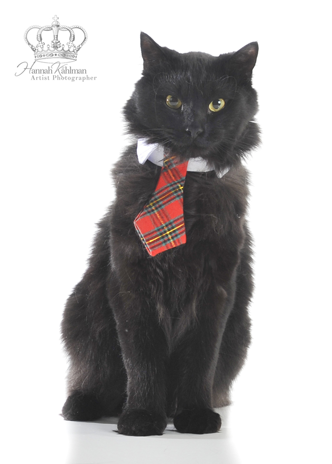 Portrait_kitten_Anchorage_Alaska_Eagle_River_pet_photographer_Hannah_Kåhlman_Artist_Photographer_Uni