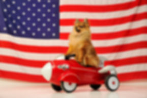 Patriotic_fun_pet_portrait_of_dog_infron