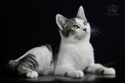 Kitten_cat_on_black_studio_background_fi