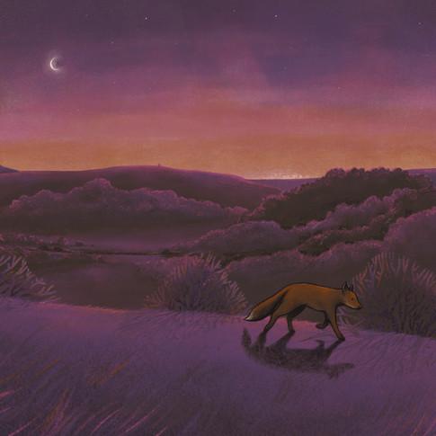 Fox at dusk