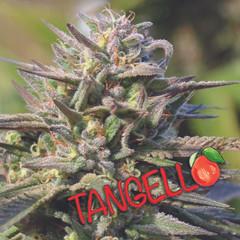 TANGO_flower_web.jpg