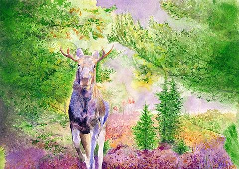 Algonquin Moose Colours 300dpi.jpg