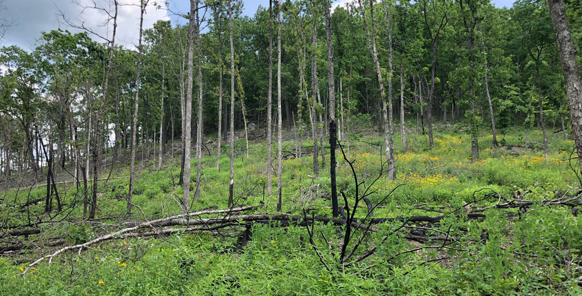 Timber stand restoration project in Missouri. Provided by Land & Legacy.