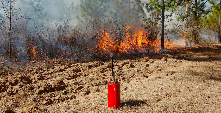 Prescribed Fire Disturbance in Longleaf Pine