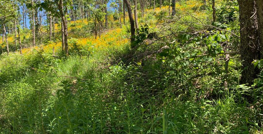 Thinned Oak Woodland