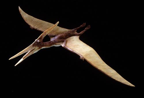 Pteranodon bas relief