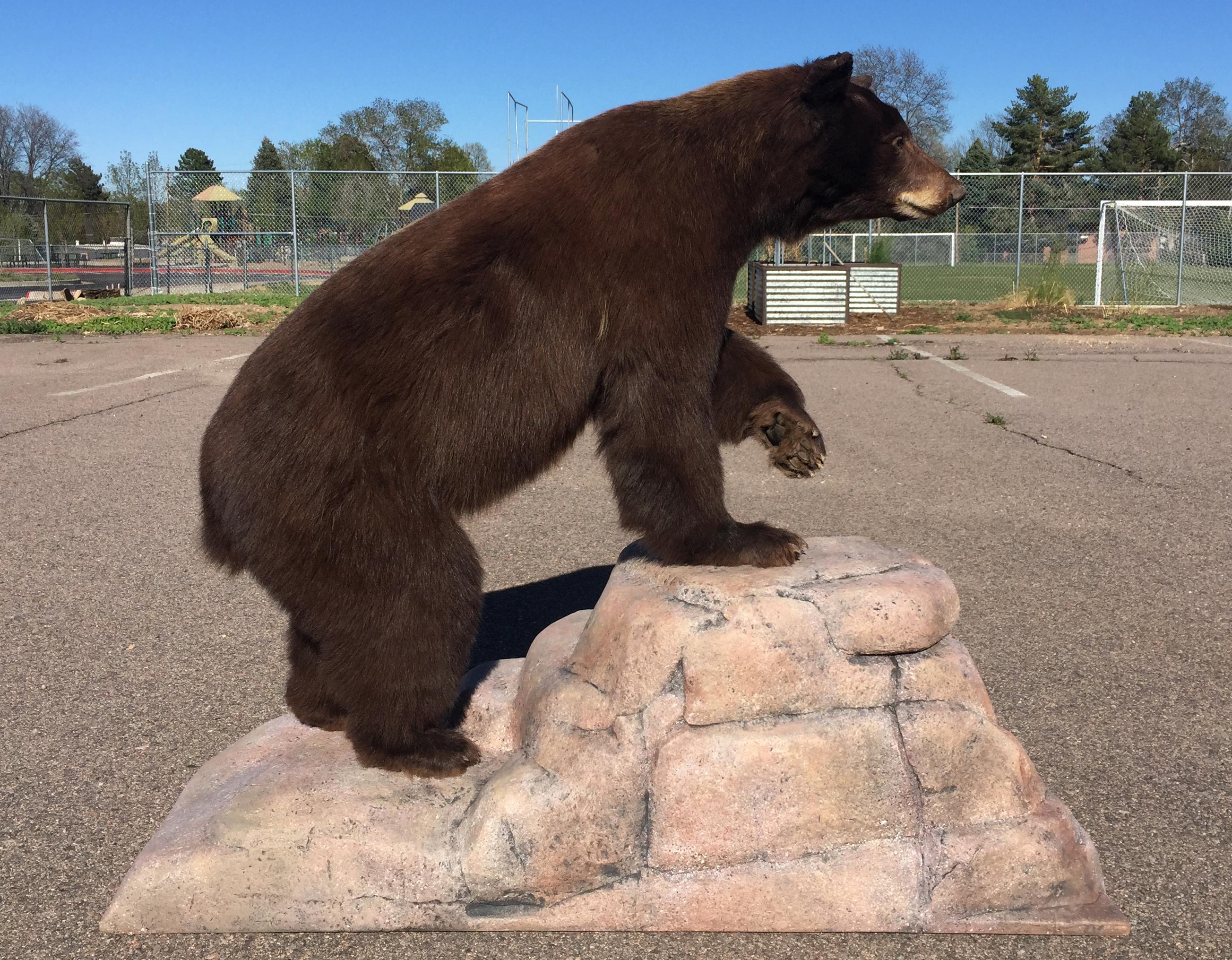 False rock, bear taxidermy base