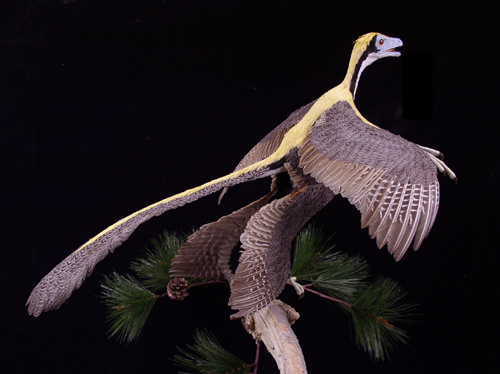 Microraptor reconstruction