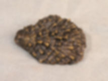 Prospondylus bivalve reconstruction Smithsonian bronze