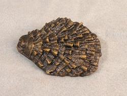 Prospondylus, Smithsonian bronze