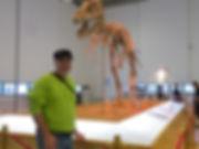 Tarbosaurus bataar skeleton Mongolia museum