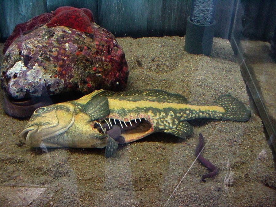 Dead fish, hagfish habitat