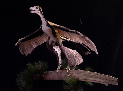 Microraptor reconstruction