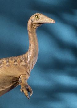 Mononykus olecranus reconstruction