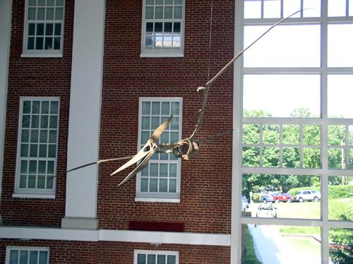Pteranodon skeleton mount