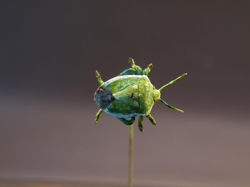 True bug